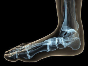 Schematische Darstellung der Fußknochen